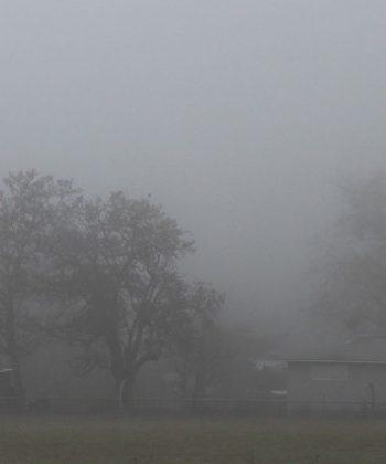 tapet personalizat tapet Foggy Garden