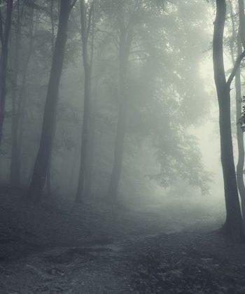 fototapet misty path